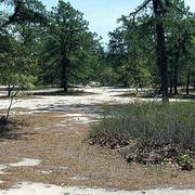 WHARTON STATE FOREST: BODINE FIELD