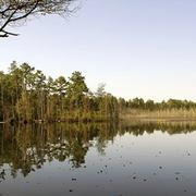WHARTON STATE FOREST: GOSHEN POND