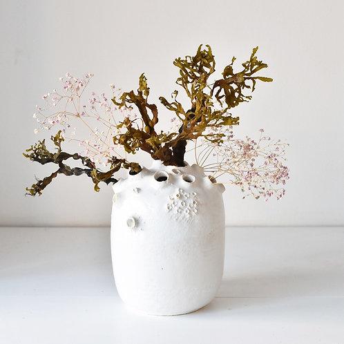 Vase, underwater flora
