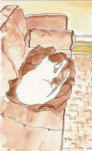 cat drawing by Sarah Van Arsdale
