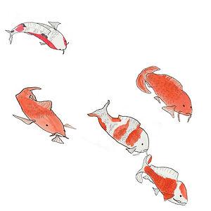 Fish drawing by Sarah Van Arsdale