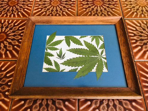 Pressed leaf collage in wooden frame 9.5in x 11.5in