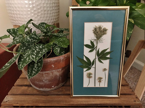 Pressed leaf/clover in golden frame 6.5in x 11in