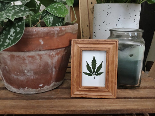 Single Pressed Leaf in Wooden Frame 3.75in x 4.75in