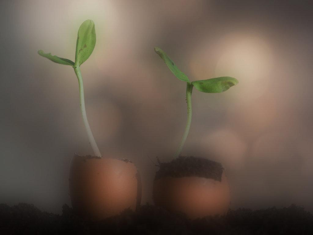 Small Plant-Blur 1.jpg