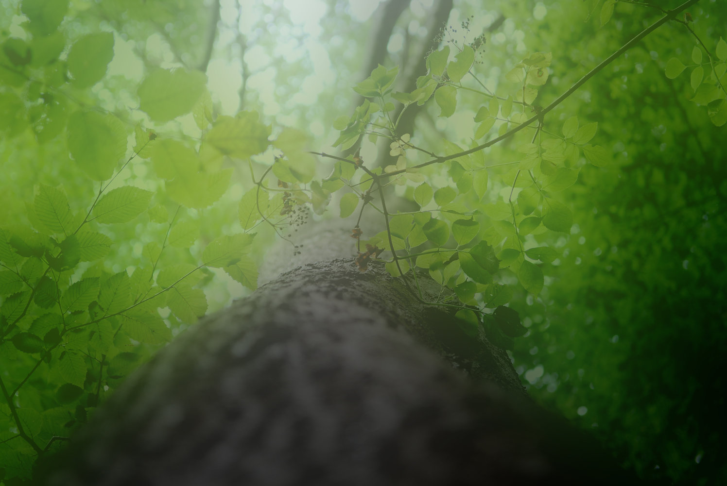 Grovewood 3–Blur 1.jpg