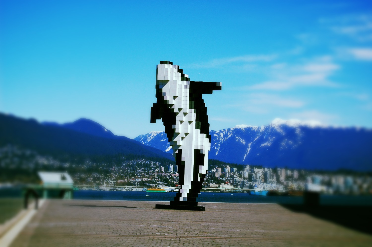 aria_capital_pixcel_whale_vancouver_edited.jpg