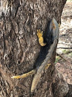 Wildlife at Yarrabandai Creek