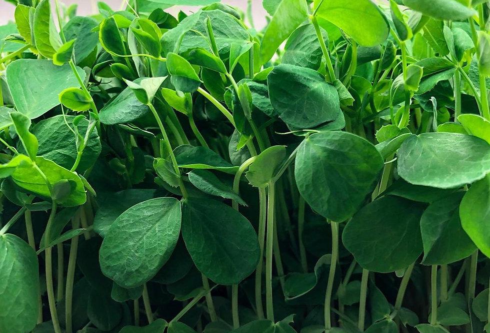 Pea Speckled Green Non-GMO