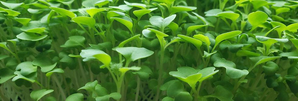 Wasabi Non-GMO