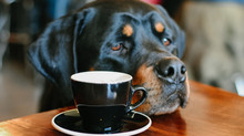Dog-Friendly Restaurants in Grand Rapids