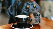 Dog-Friendly Restaurants in Grand Rapids