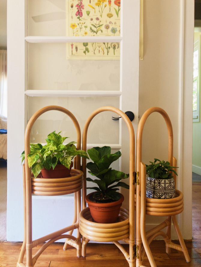 The Perfect House Plants for Your Home