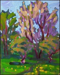 orchard at blue jay creek farm