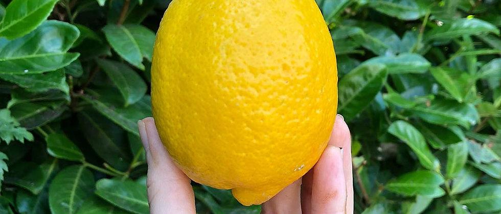 Organic Lemons (1 Pieces)