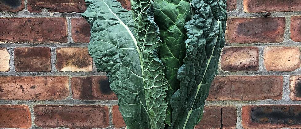 Organic Cavolonero Kale (300g)
