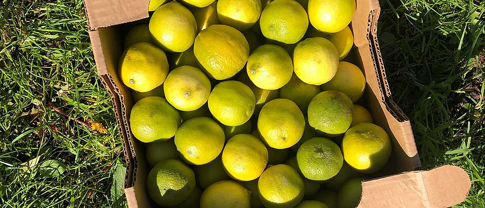 Organic Limes (Single)