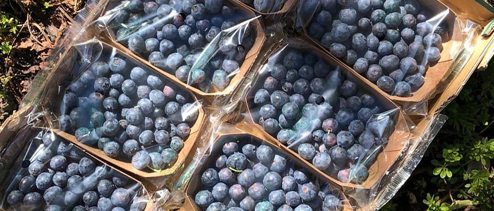 Organic Blueberries (125g)