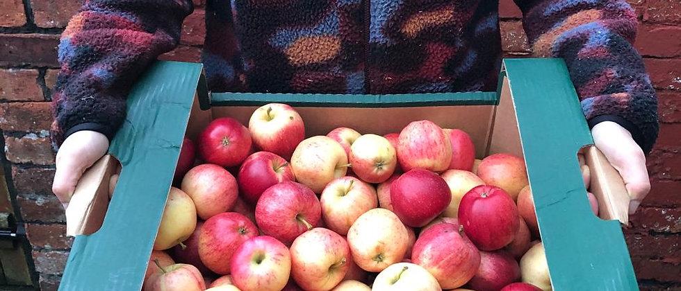 Organic Gala Apples (700g)