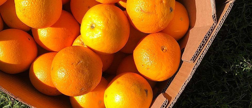 Organic Orange (1KG)