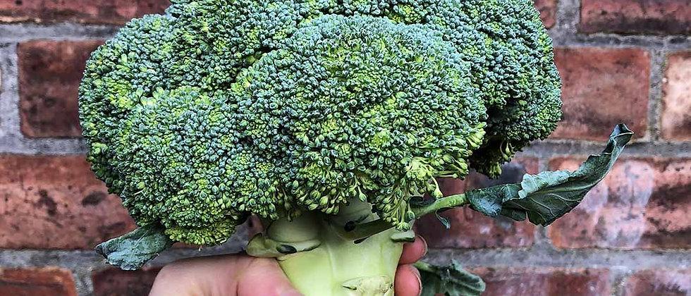 Organic Broccoli (500g)