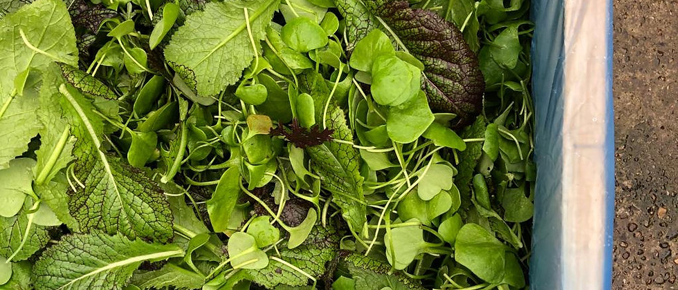 Organic Salad Leaves Mix (90g)