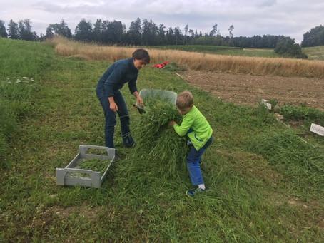 Kinder-Arbeit