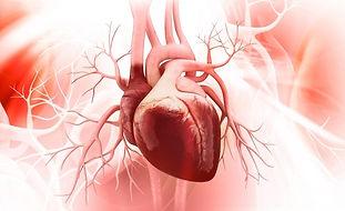 human-heart1_0.jpeg