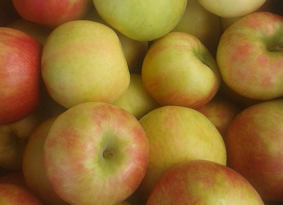 Honey Crisp Apples (Local - Not Organic) - GHF