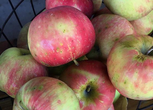 Organic Honeycrisp Apples - GHF