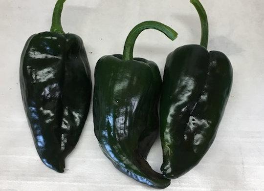 Poblano/Ancho Pepper Plant - GHF