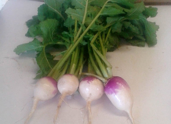 Purple Top Turnips w/tops - GHF