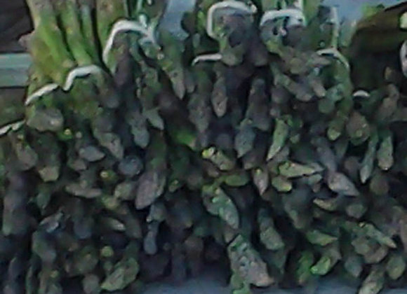 Asparagus - GHF