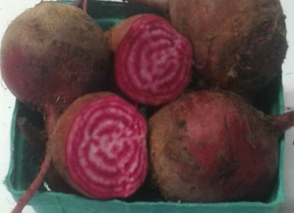 Chioggia Beet Roots - GHF