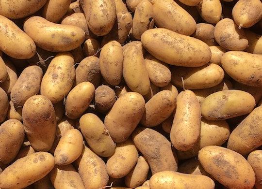 Russian Banana Fingerling Potatoes - GHF