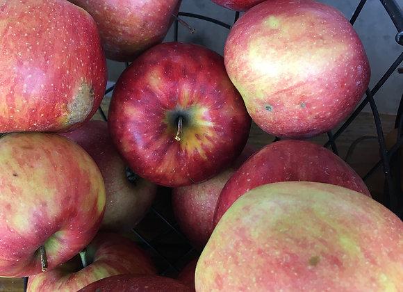 Organic Jonagold Apples - GHF