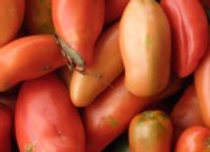 San Marzano (Paste) Plant - GHF