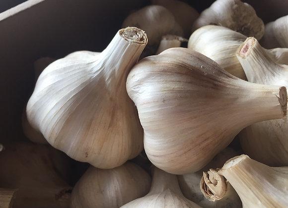 Garlic - GHF