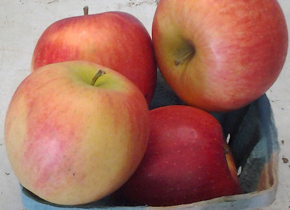 Nittany Apples (Local - Not Organic) - GHF