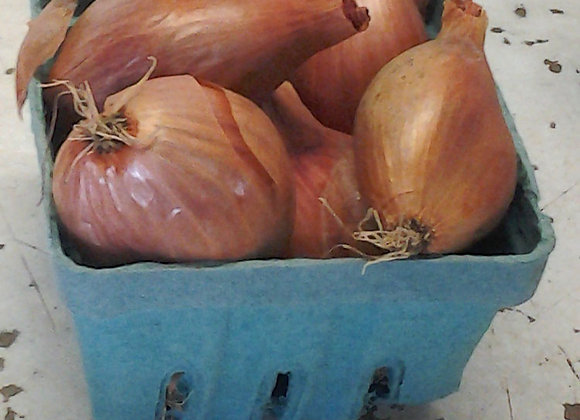 Red French Shallots - GHF