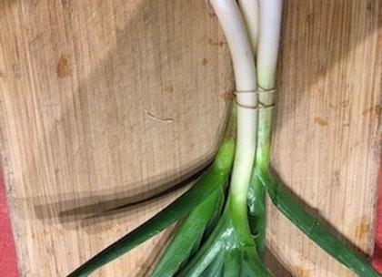 Spring Garlic - GHF
