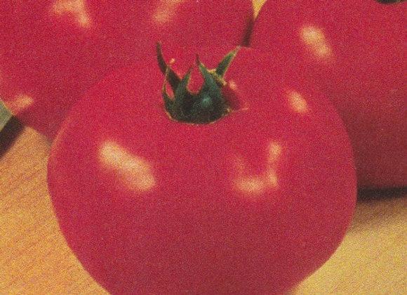 Abraham Lincoln Tomato Plant - GHF
