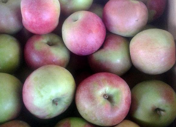 MacIntosh (Local - Not Organic) - GHF