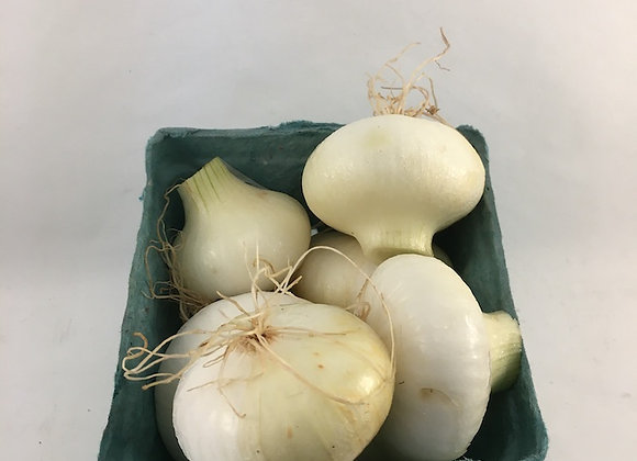 Yellow Cippolini Onions - GHF