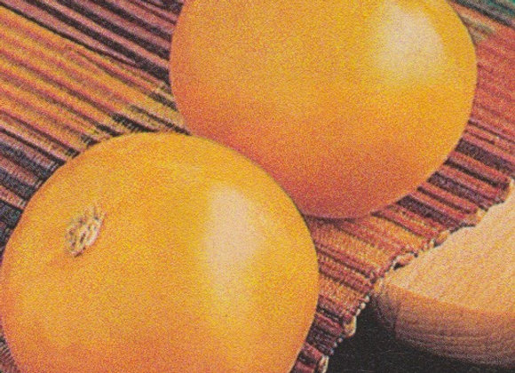 Carolina Gold Tomato Plant - GHF
