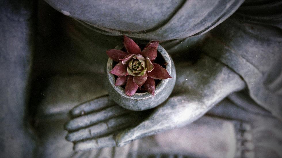 Mains de Budha.jpg