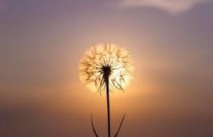 在有限的集體意識裡,以愛活出不設限、非凡的自己