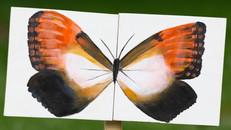 Millway Meadows & Villamay Social Butterfly Exhibits