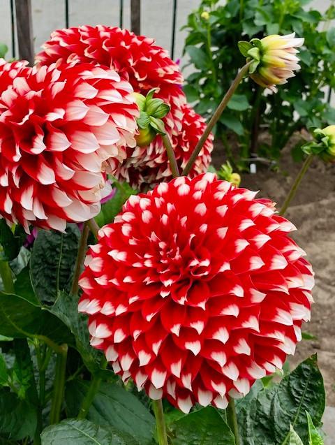 Flowers - Golden Gate Park