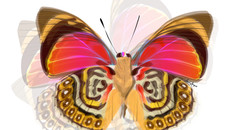 September Butterfly - Art Work